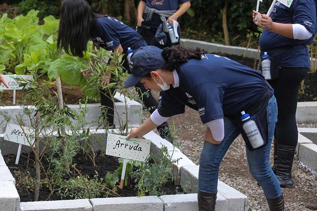 Colabradores trabalham na horta da ONG Chácara das Flores no Dia dos Voluntários