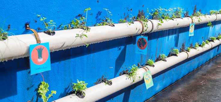 Horta é plantada em canos fixados na parede da Escola Municipal de Ensino Fundamental Frei Fernando, que recebeu o programa de voluntariado Vacaciones Solidárias.