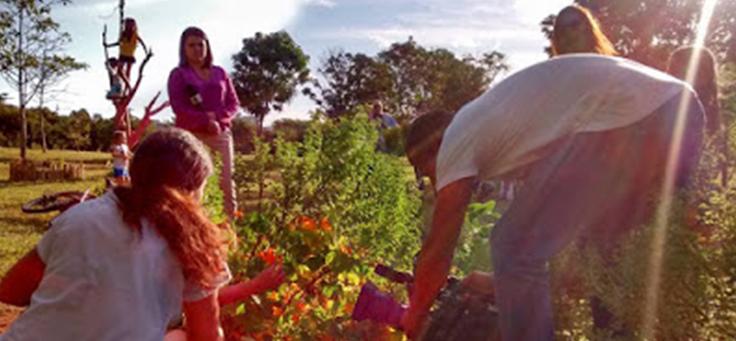 Equipe da 416 Norte está cuidando de plantas em espaço público. Coletivo é uma das iniciativas voluntárias da lista.